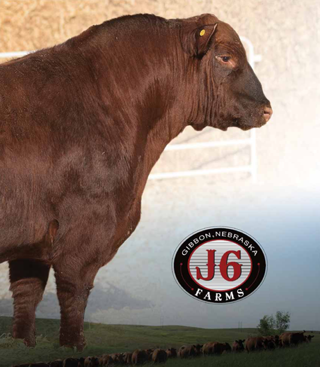 J6 Farms Bull & Female Sale 2021 photo